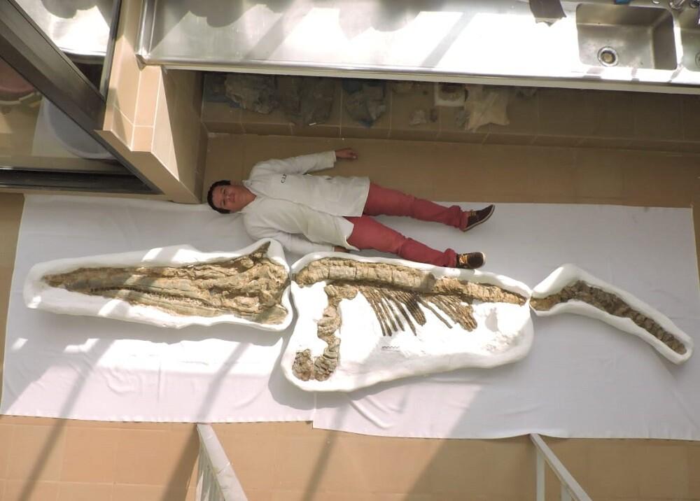 332288_BLU Radio, Fósil Ictiosaurio // Foto: Suministrada