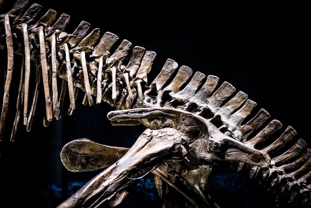 Restos de dinosaurio