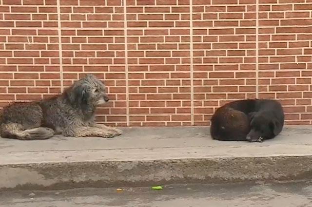 Fernando Kushner, el millonario boliviano que dejó su vida de lujos para ayudar a los perros callejeros, murió por COVID-19.