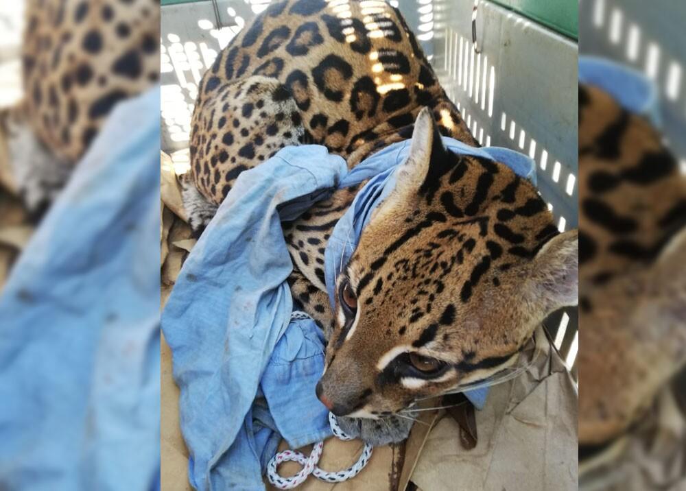 Venta ilegal de fauna