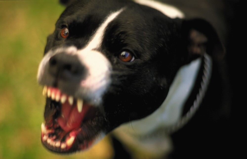 Cómo enfrentar la agresividad en las mascotas.