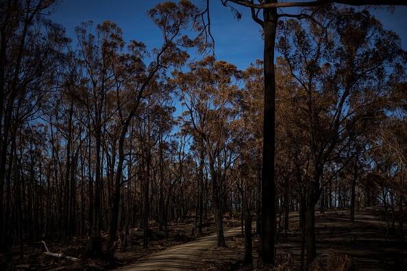 Wairewa Residents Survey Damage In Aftermath Of East Gippsland Bushfires
