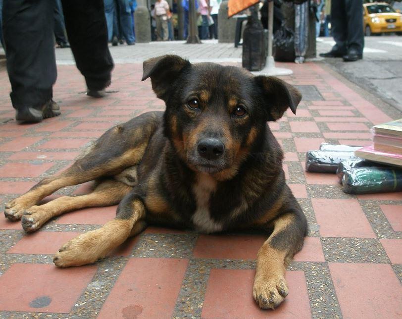 perro callejero.JPG