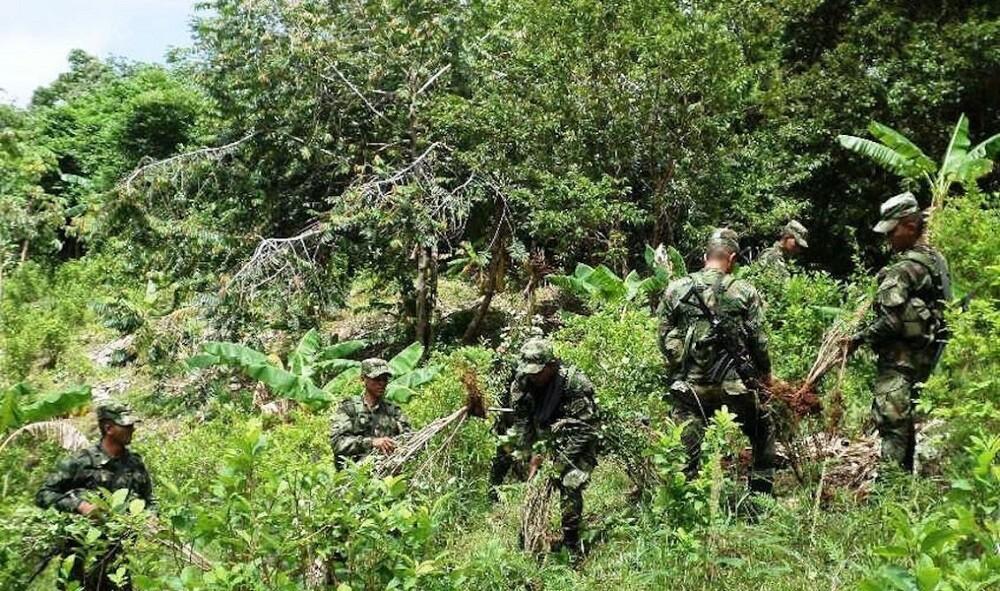 329025_BLU Radio. Erradicación de cultivos ilícitos / Foto: Ejército