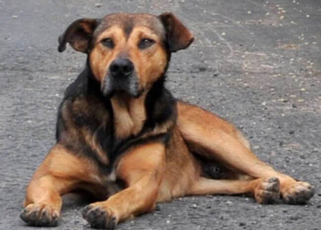 Perro callejero en Colombia
