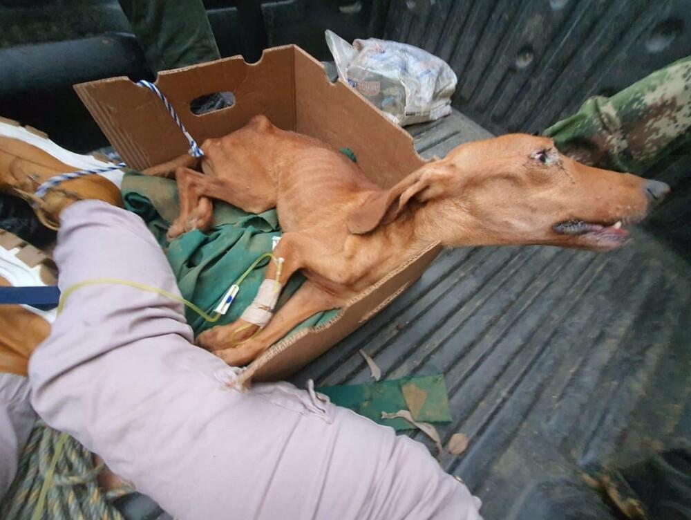 maltrato animal en Cocorná