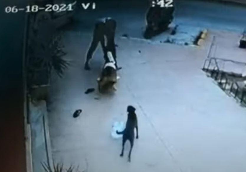 ataque de perro a niña de 2 años en españa