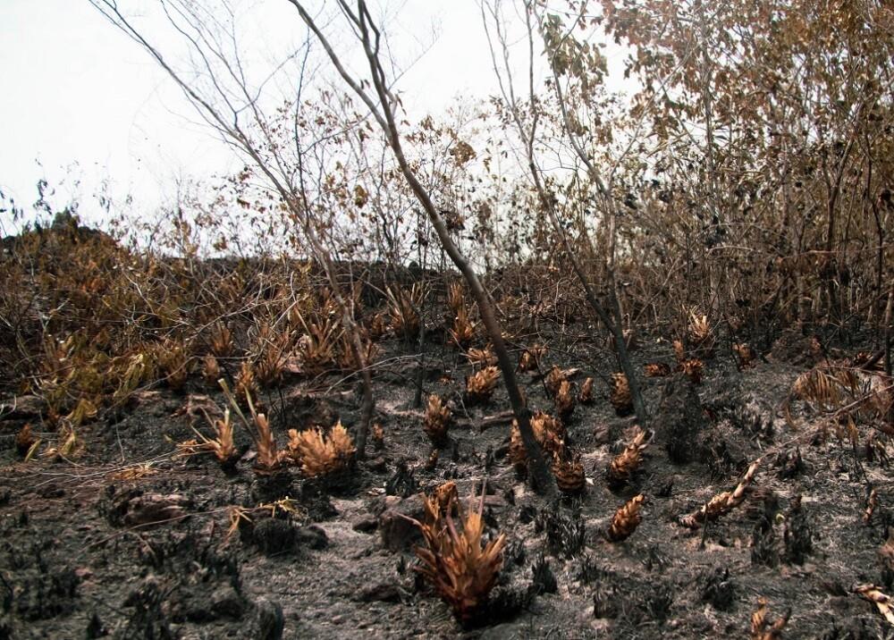 335140_BLU Radio // Deforestación en la Amazonía // Foto: Visión Amazonía