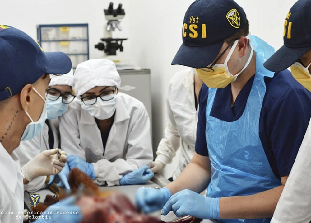 346211_BLU Radio. Unidad de Medicina Veterinaria Forense en Medellín / Foto: Facebook Medicina Veterinaria Forense