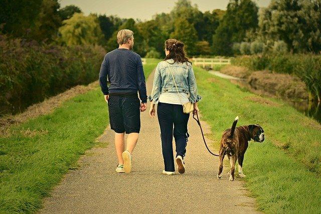España debatirá ley sobre custodia compartida de mascotas en divorcios.jpg