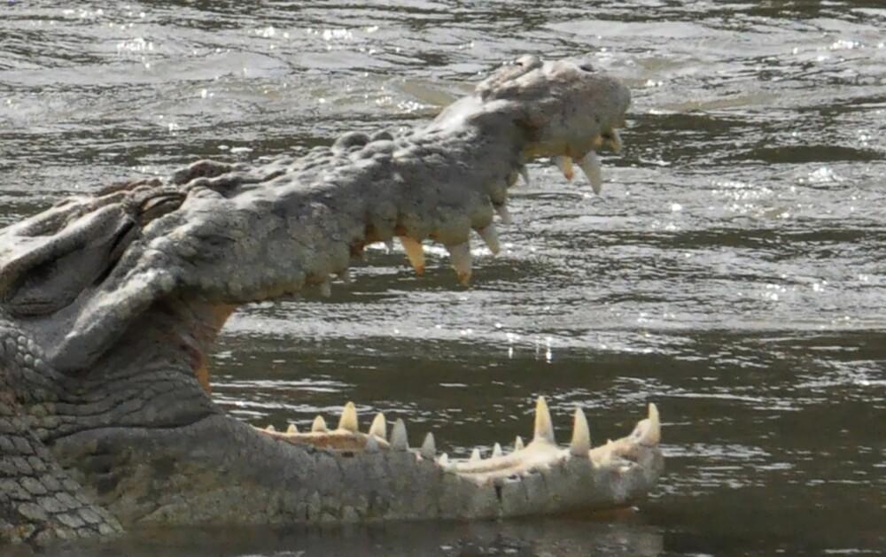Rescatan a un hombre de las fauces de un cocodrilo que lo atacó mientras nadaba