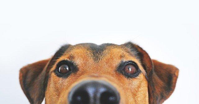 Día del Perro tiene lugar el 26 de agosto.