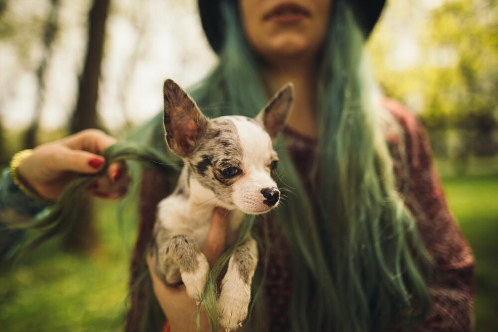 Enseña a tu mascota a adaptarse rápidamente a su nueva familia.
