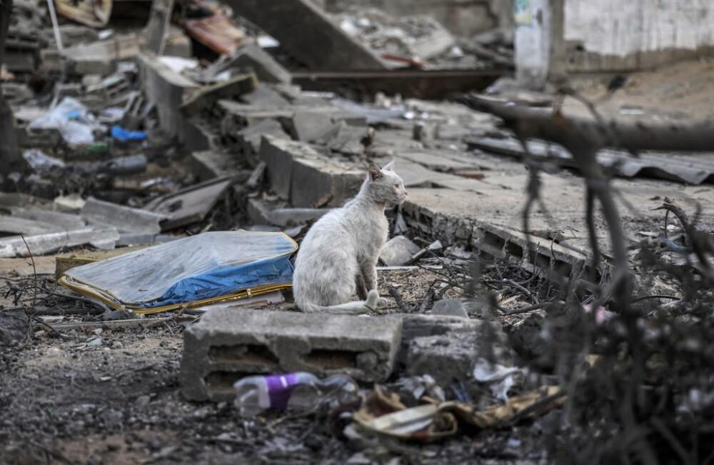Gato sobre escombros en Palestina luego de un ataque israelí