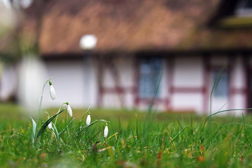 Familia alquila una casa y encuentra a su dueña enterrada en el jardín
