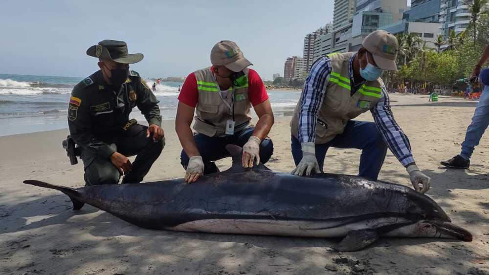 delfin muerto en playas de cartagena.jpeg