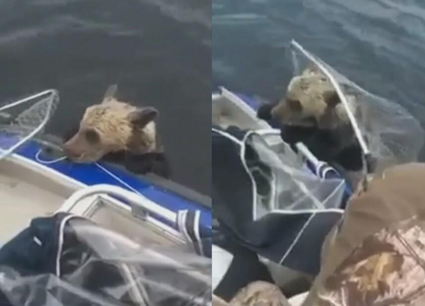 Salieron a pescar sin imaginar que rescatarían con sus redes a un oso en un río