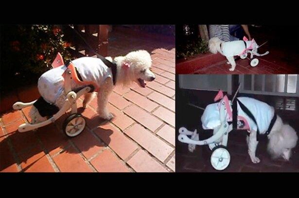protesis-perros-uao2.jpg