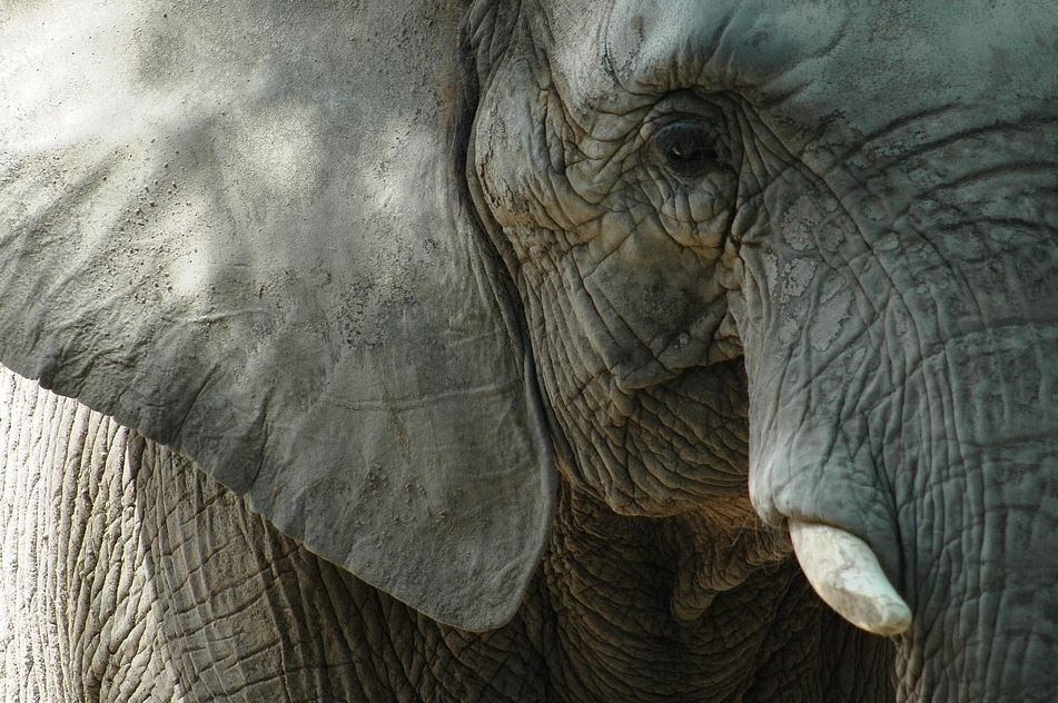 elefante mata turista tailandia.JPG
