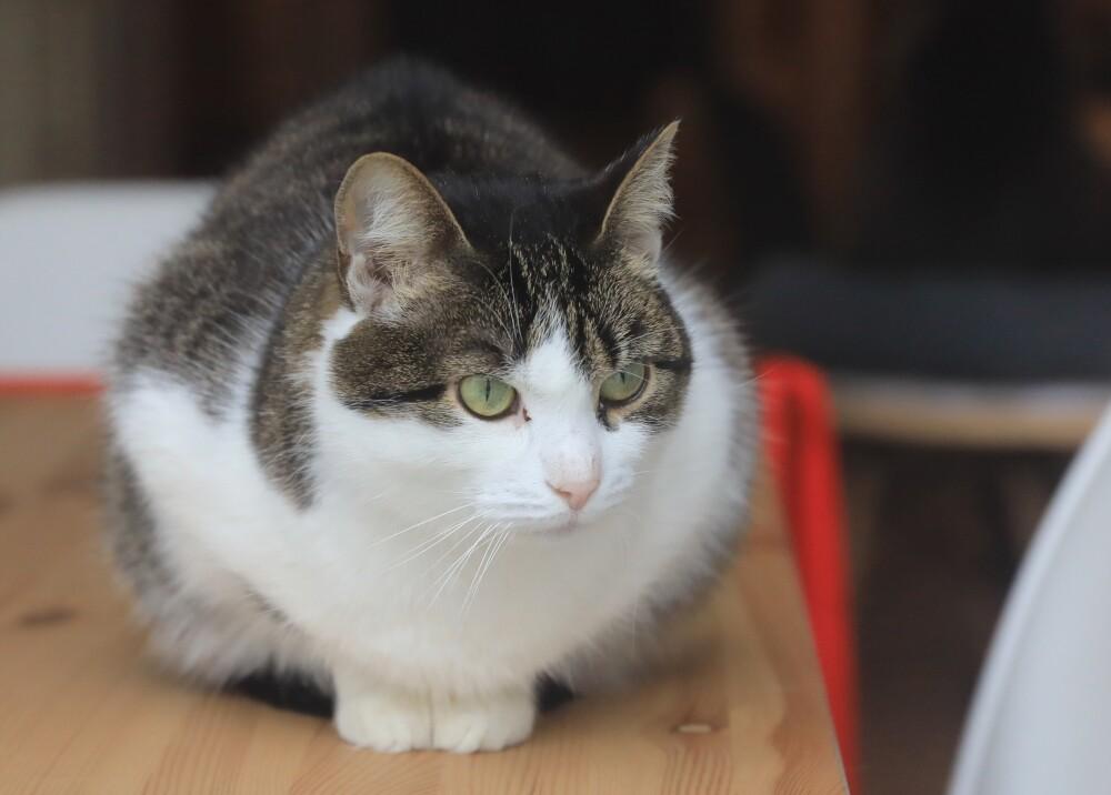 afp gato gatos referencia.jpg
