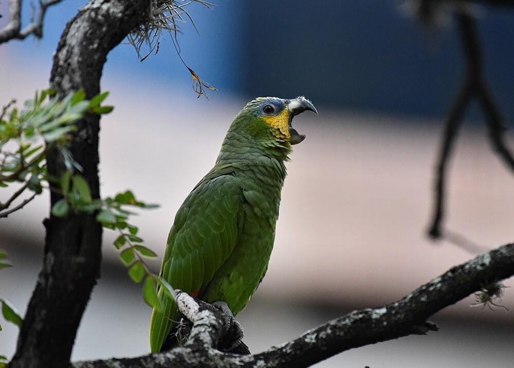 366258_Loro Animales / Foto: AFP