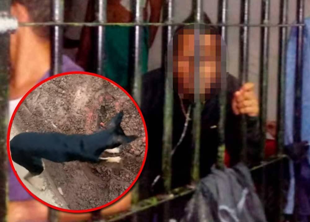 Perro delató a su mano, un narcotraficante en Brasil.jpeg
