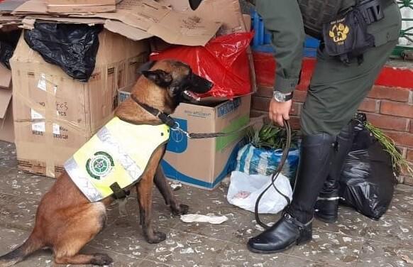 Perro encontró papeletas de bazuco en galería de Calima (1).jpeg