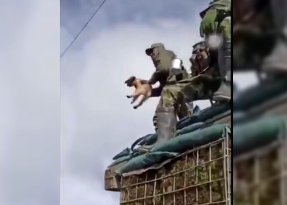 367882_militar_tira_a_un_cachorro_por_los_aires.jpg