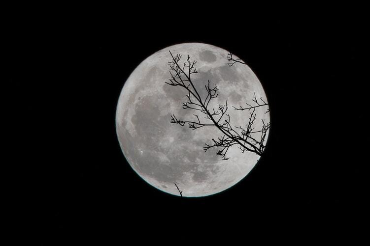 Luna Lobo.jpg