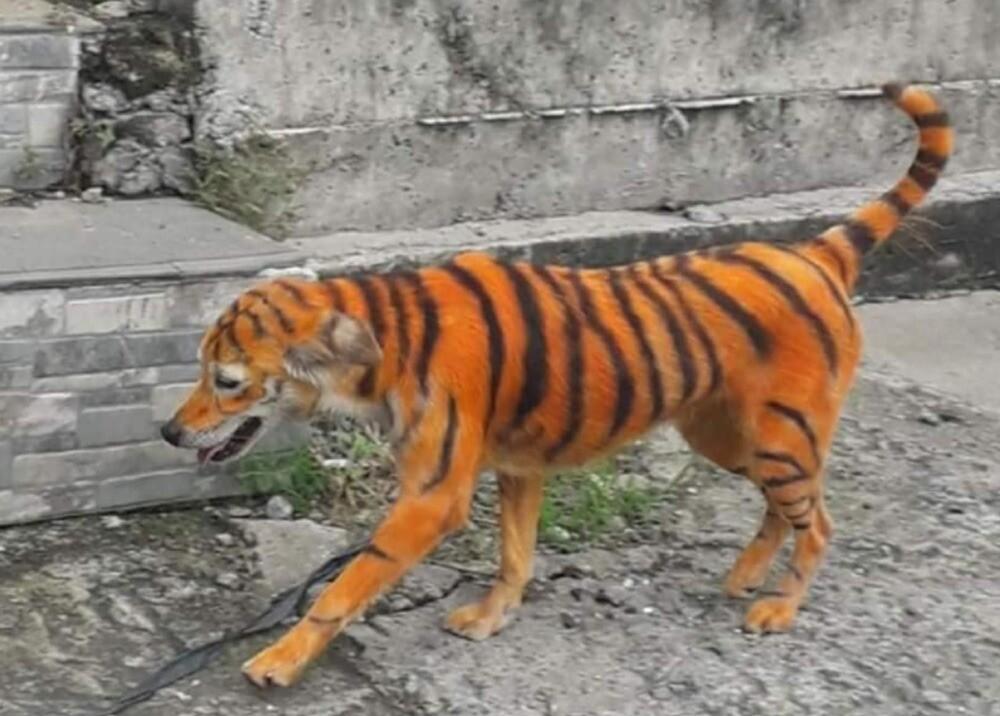 376525_Foto: Persatuan Haiwan Malaysia - Malaysia Animal Association