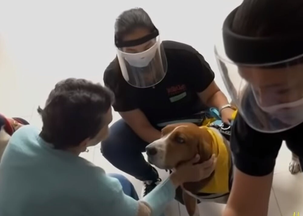 perros que salvan vidas en medellin.jpg