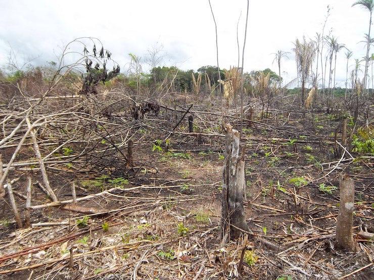 371013_Tala de árboles. Foto: Cortesía
