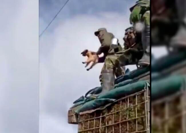 367938_militar_tira_a_un_cachorro_por_los_aires.jpg