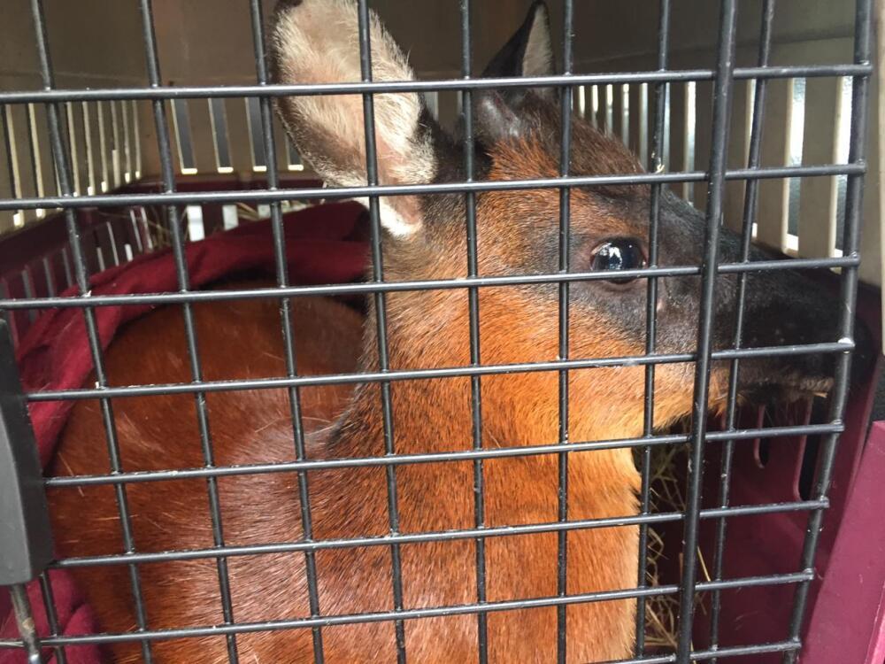 Bambi rescatado 2.jpeg