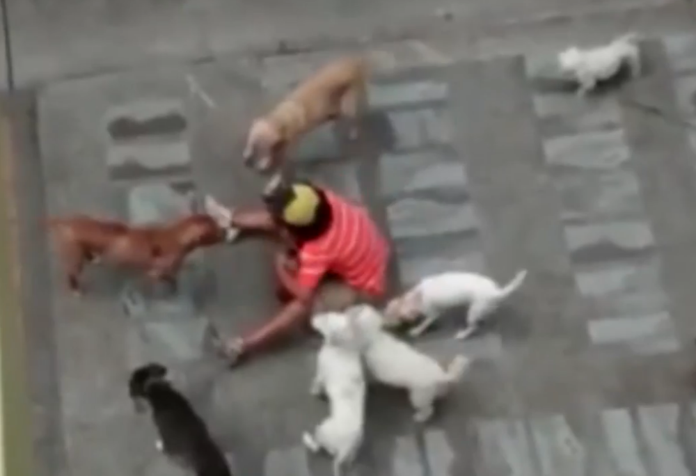 Video de supuesto maltrato animal en Pasto