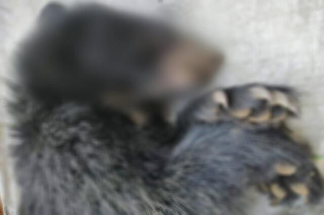 oso_asesinado_en_el_cauca_0.jpg