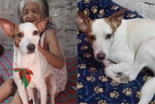 Mujer busca a su perro perdido en Cali