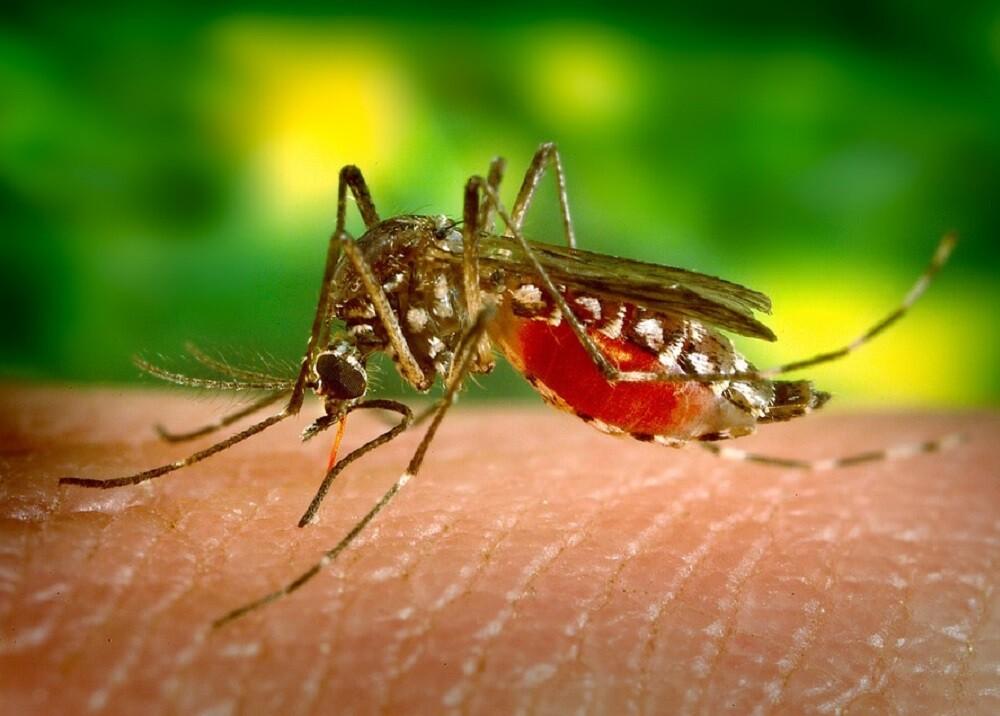 329905_BLU Radio, Dengue referencia / Foto: Pixabay