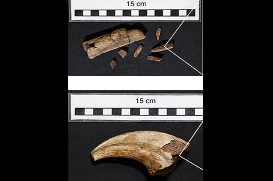 090615_fosiles.jpg
