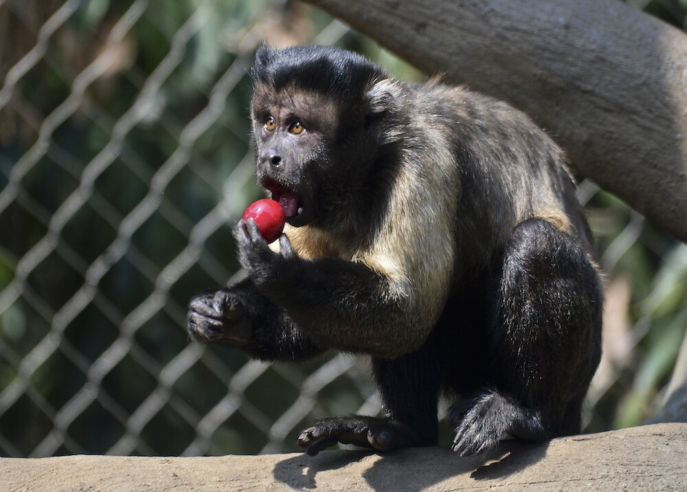 359959_Zoológico de Cali / Foto: AFP