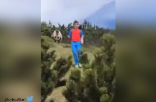Niño y oso en Italia