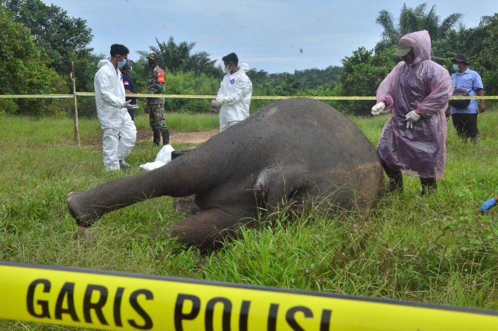 Elefante asesinado