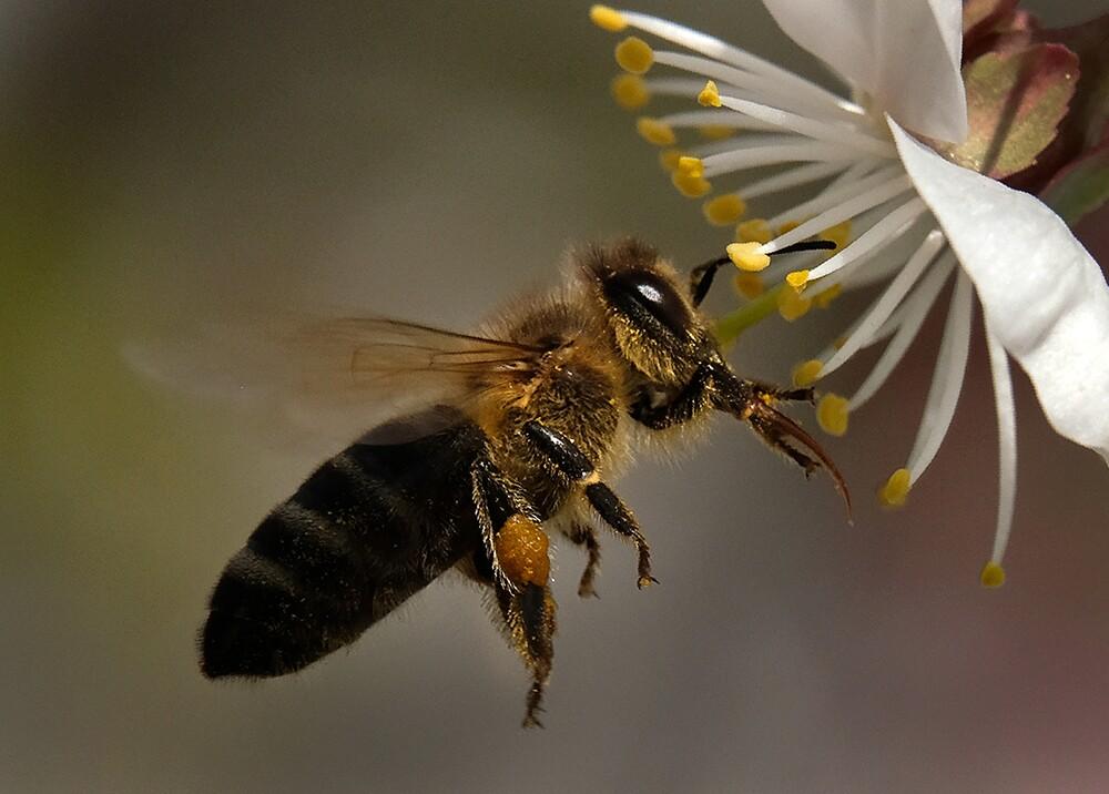 305097_BLU Radio. Abejas pesticidas / Foto: AFP
