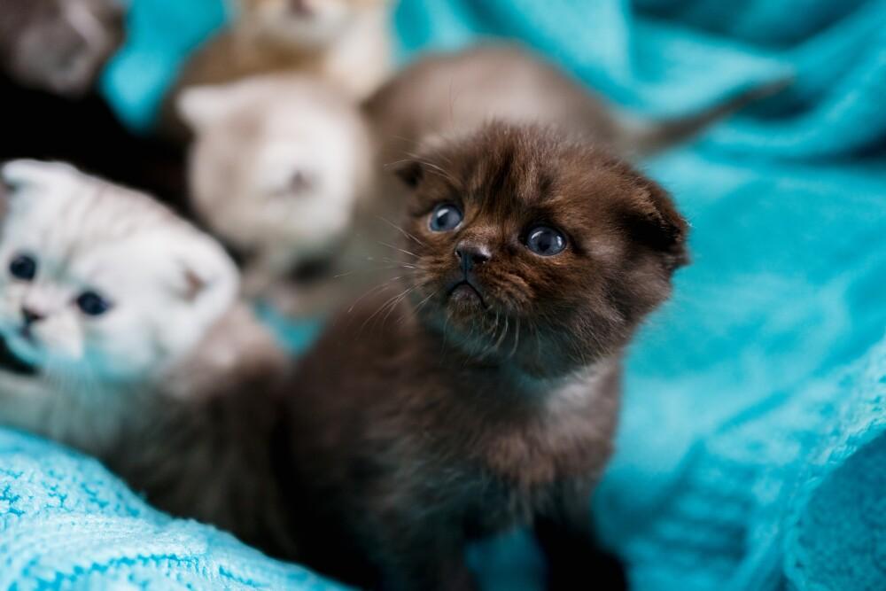 5 fotos de mascotas tiernas que te robarán el corazón.