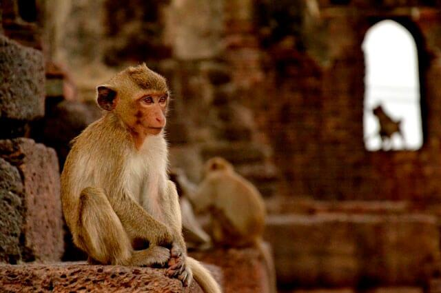 macacos-tailandia.jpg