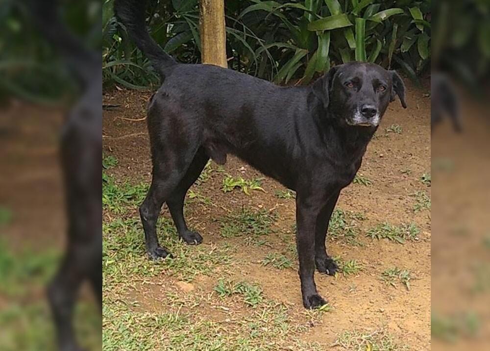tommy el perro apuñalado en los genitales por salvaje en Antioquia.jpg