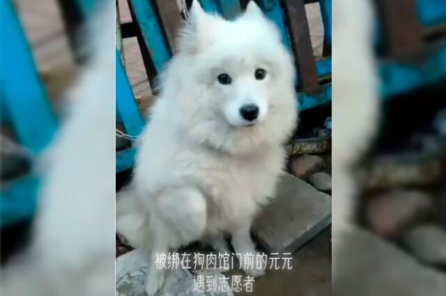 perro-rescatado-china.jpg
