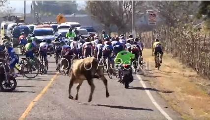 Un toro correteó a los ciclistas del Tour Por La Paz 2021.