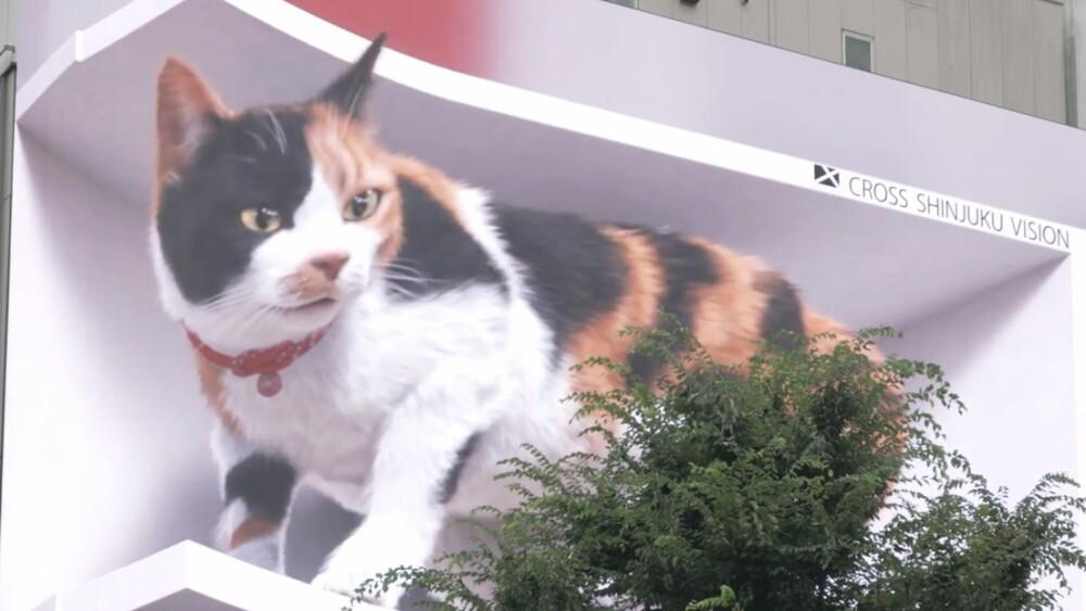 gato 3 d japon cross space.jpg