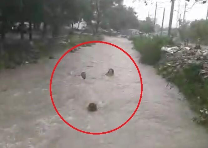 ocupantes de taxi que se salvaron de morir ahogados.jpg
